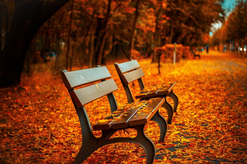 Park benches on the side of a walkway covered in autumn leaves